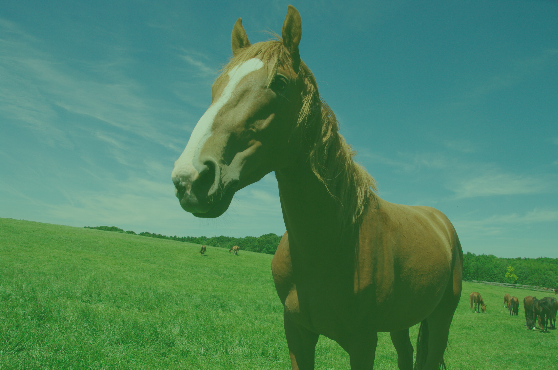 hobune1